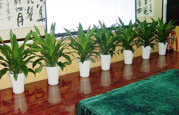 浅谈办公室装修中绿植的作用